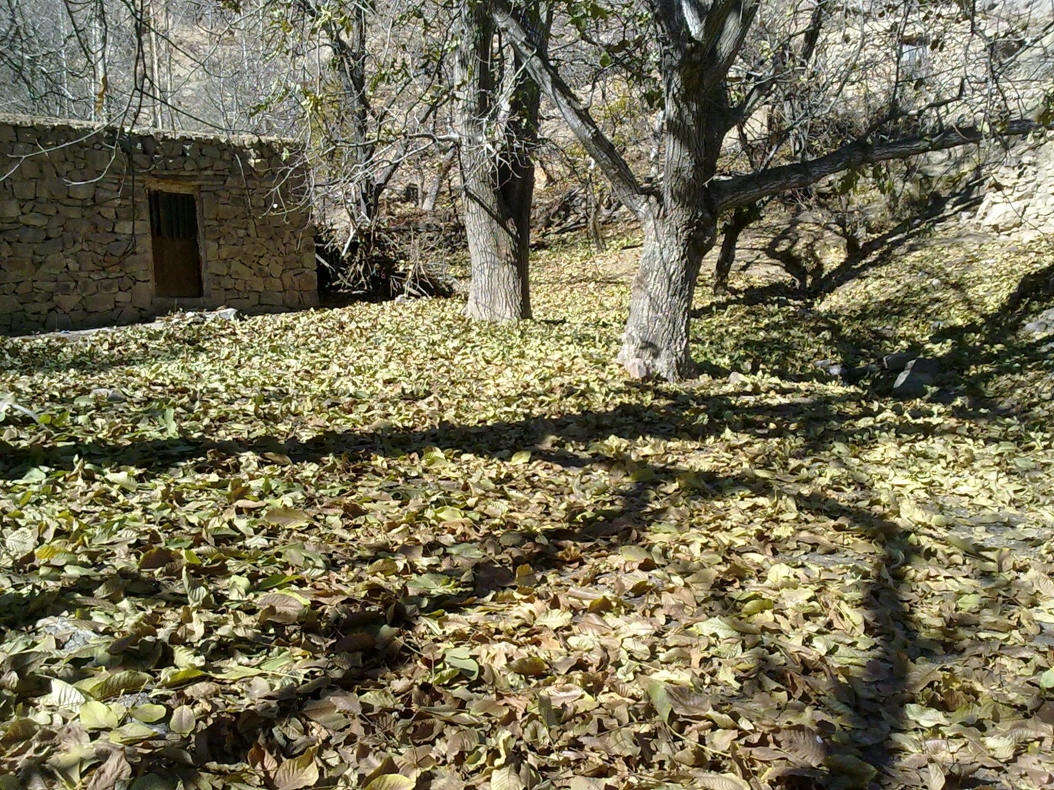 روستای صرفه از توابع دهستان گروه در پاییز